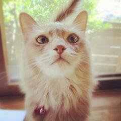 久々の猫ブログ更新!
